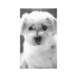 Photography White Puppy Canvas Print