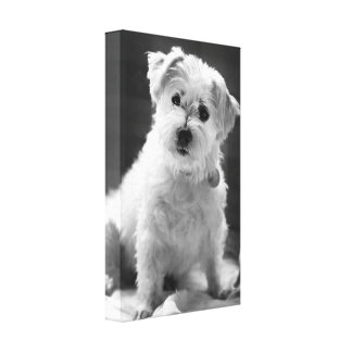 Photography White Puppy Dog Canvas Print