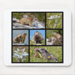 Photos mosaic Alpine marmots and edelweiss Mousepads