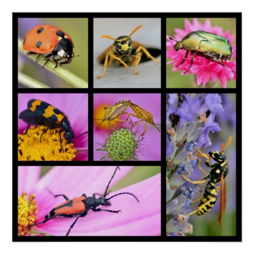 Photos mosaic of insects poster