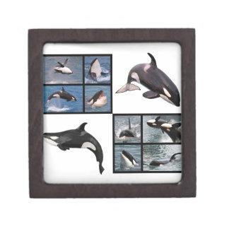 Photos mosaic of killer whales gift box