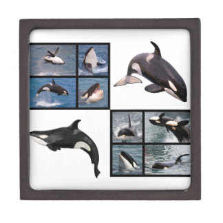 Photos mosaic of killer whales jewelry box