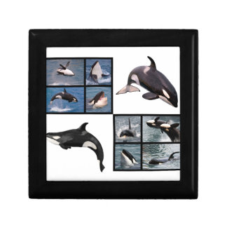 Photos mosaic of killer whales keepsake box