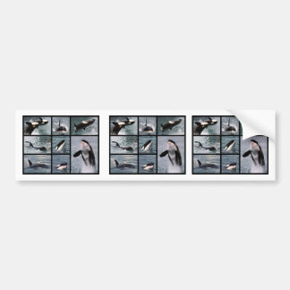 Photos multiple of killer whales bumper sticker