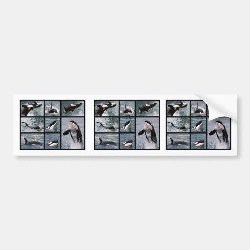 Photos multiple of killer whales bumper sticker