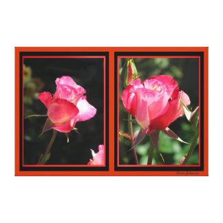 Photos on Canvas - Pink-Red Roses Stretched Canvas Print