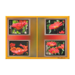 Photos on Canvas - Red Daisies Canvas Prints