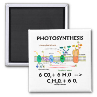 Photosynthesis (Carbon Dioxide + Water) Fridge Magnet