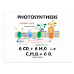 Photosynthesis (Carbon Dioxide + Water) Post Card