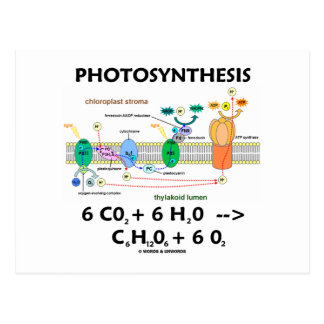 Photosynthesis (Carbon Dioxide + Water) Postcard
