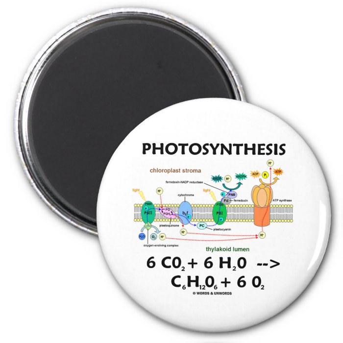 Photosynthesis (Chemical) Formula 2 Inch Round Magnet