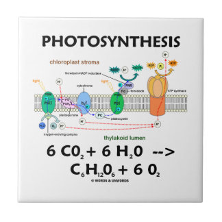 Photosynthesis (Chemical Formula) Ceramic Tile