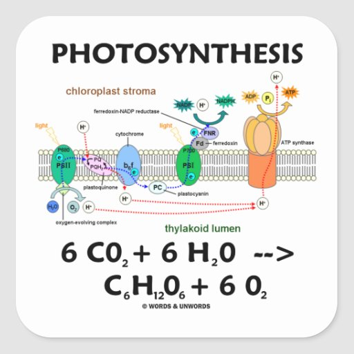 photosynthesis chemical equation Cellular respiration: • cellular respiration equation (products and reactants) c6h12o6 + o2  photosynthesis vs respiration.