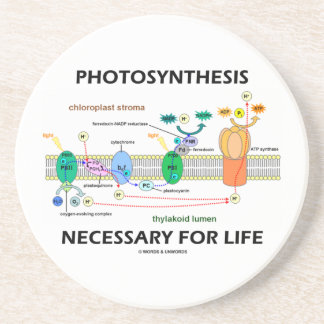 Photosynthesis Necessary For Life Light-Dependent Coaster