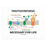 Photosynthesis Necessary For Life Post Cards