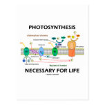 Photosynthesis Necessary For Life Postcard