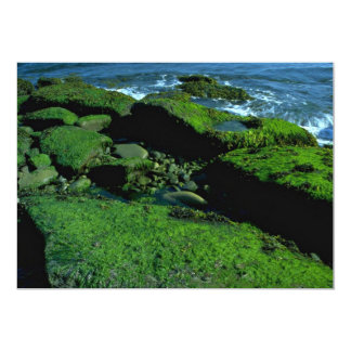 "Photosynthesis On The Rocks 5"" X 7"" Invitation Card"