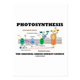 Photosynthesis The Original Green Energy Source Postcard