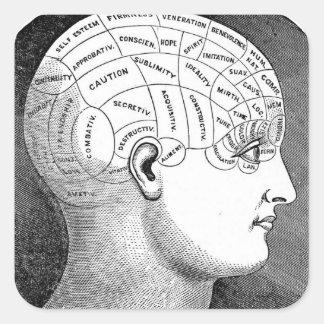 Phrenology Head Diagram Square Sticker