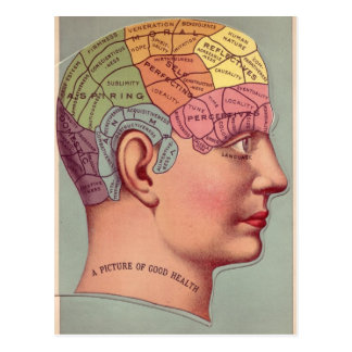 Phrenology Head in Color Post Card