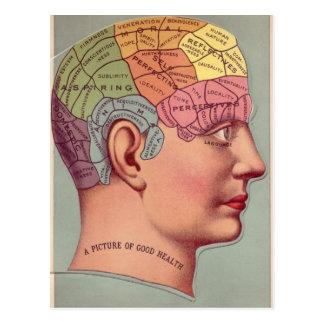 Phrenology Map for Good Health Postcard