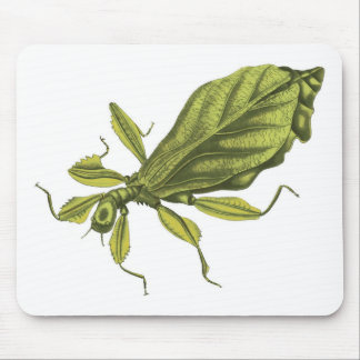 Phyllium Siccifolia Mousepads