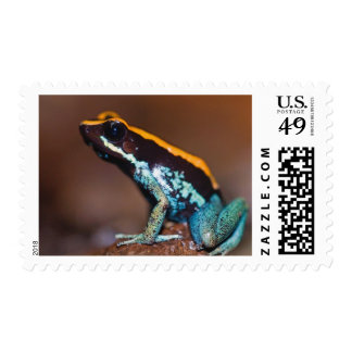 Phyllobates vittatus, a poison arrow frog postage