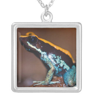 Phyllobates vittatus, a poison arrow frog silver plated necklace