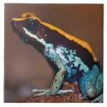 Phyllobates vittatus, a poison arrow frog ceramic tiles