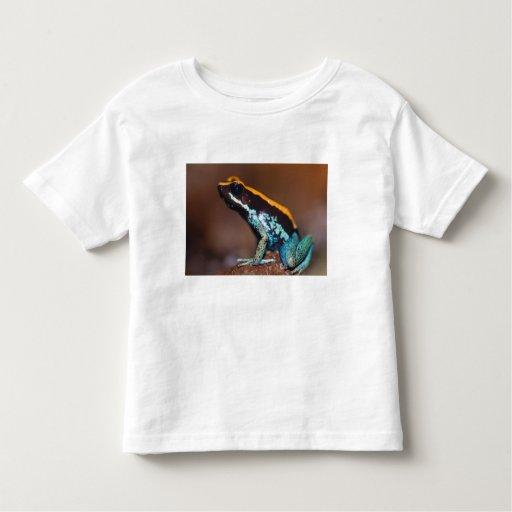 Phyllobates vittatus, a poison arrow frog toddler t-shirt