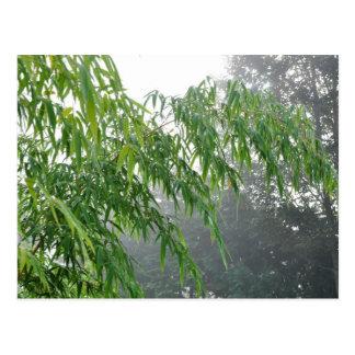 Phyllostachys Vivax Aureocaulis bambú Postal