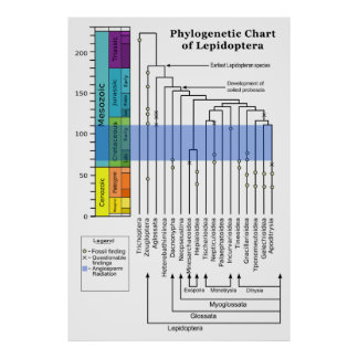 Phylogenetic Chart of Lepidoptera Poster
