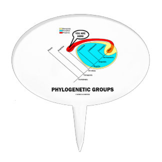 Phylogenetic Groups (Mammalia) You Are Here Cake Topper