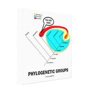Phylogenetic Groups (Mammalia) You Are Here Canvas Print