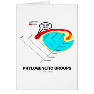 Phylogenetic Groups Mammalia You Are Here Greeting Card
