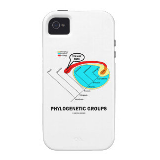 Phylogenetic Groups (Mammalia) You Are Here iPhone 4 Cases