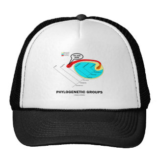 Phylogenetic Groups Mammalia You Are Here Hats