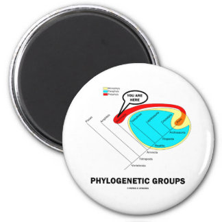 Phylogenetic Groups Mammalia You Are Here Magnet