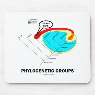 Phylogenetic Groups Mammalia You Are Here Mousepads