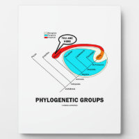 Phylogenetic Groups (Mammalia) You Are Here Plaque