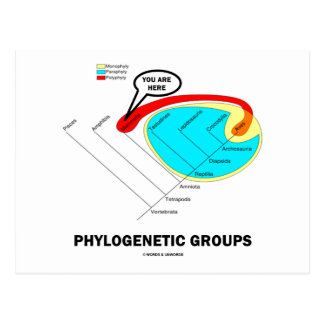 Phylogenetic Groups Mammalia You Are Here Post Card