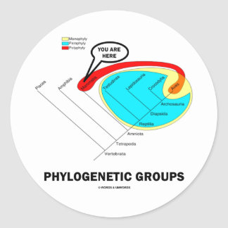 Phylogenetic Groups Mammalia You Are Here Stickers