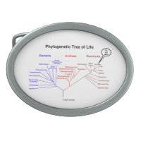 Phylogenetic Tree Of Life You Are Here Belt Buckles