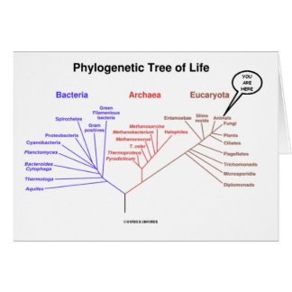 Phylogenetic Tree Of Life - You Are Here (Biology) Card