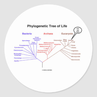 Phylogenetic Tree Of Life - You Are Here (Biology) Classic Round Sticker