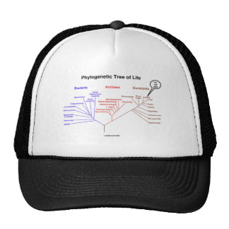 Phylogenetic Tree Of Life - You Are Here Biology Mesh Hats