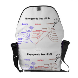 Phylogenetic Tree Of Life You Are Here Biology Commuter Bag