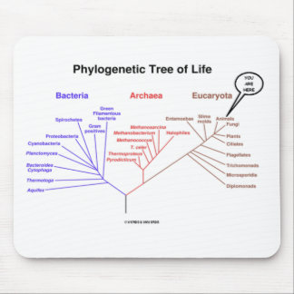 Phylogenetic Tree Of Life - You Are Here (Biology) Mouse Pad