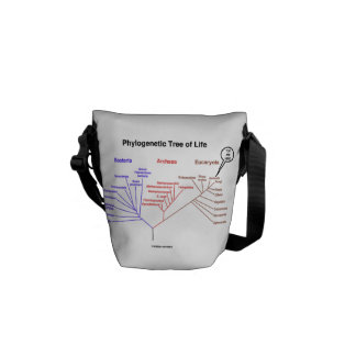 Phylogenetic Tree Of Life You Are Here Courier Bag