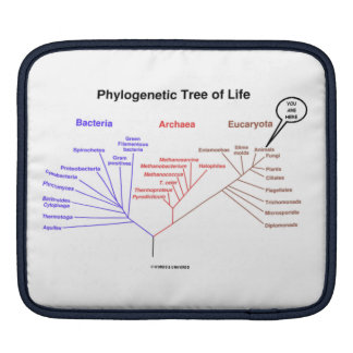 Phylogenetic Tree Of Life You Are Here iPad Sleeve